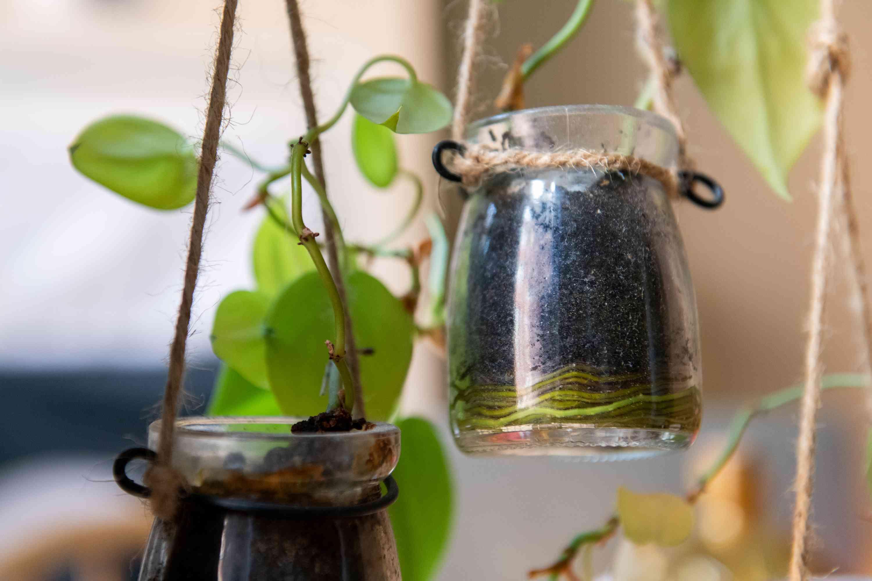 raíces de plantas que han dejado atrás su contenedor