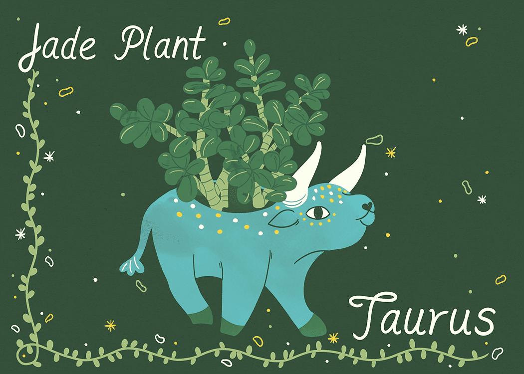 taurus jade plant illustration