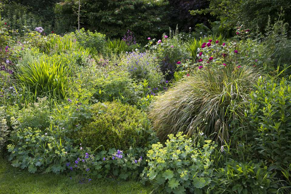 English country garden in early June