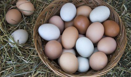 Fresh laid eggs
