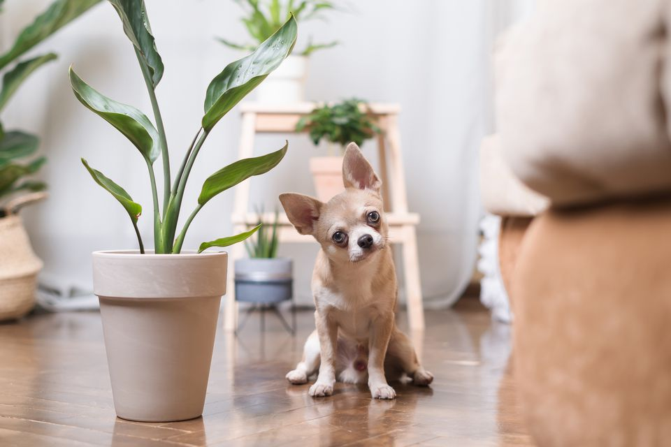 small dog posing next to plant