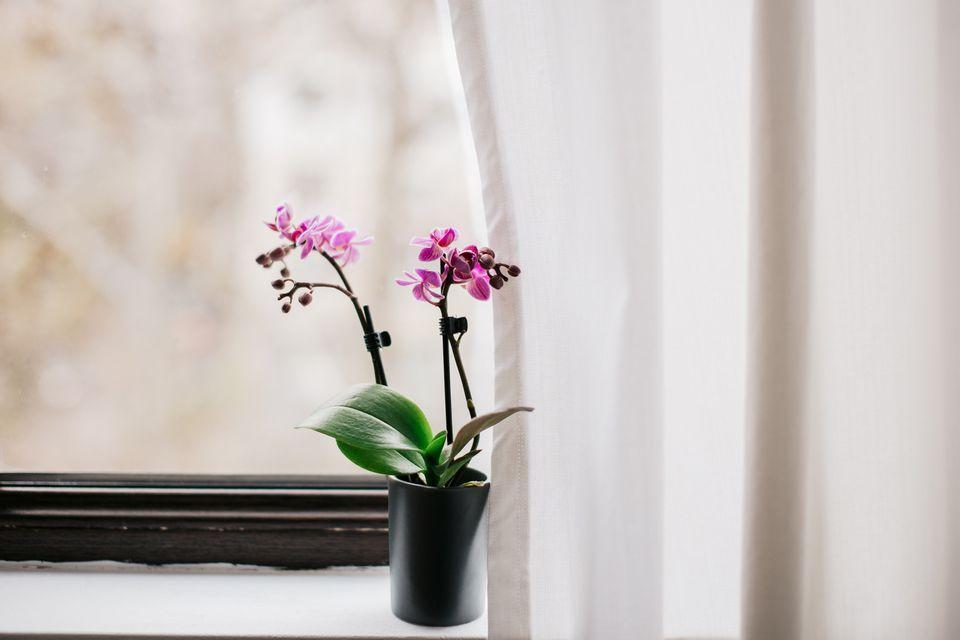 Una planta de orquídeas en flor en un alféizar