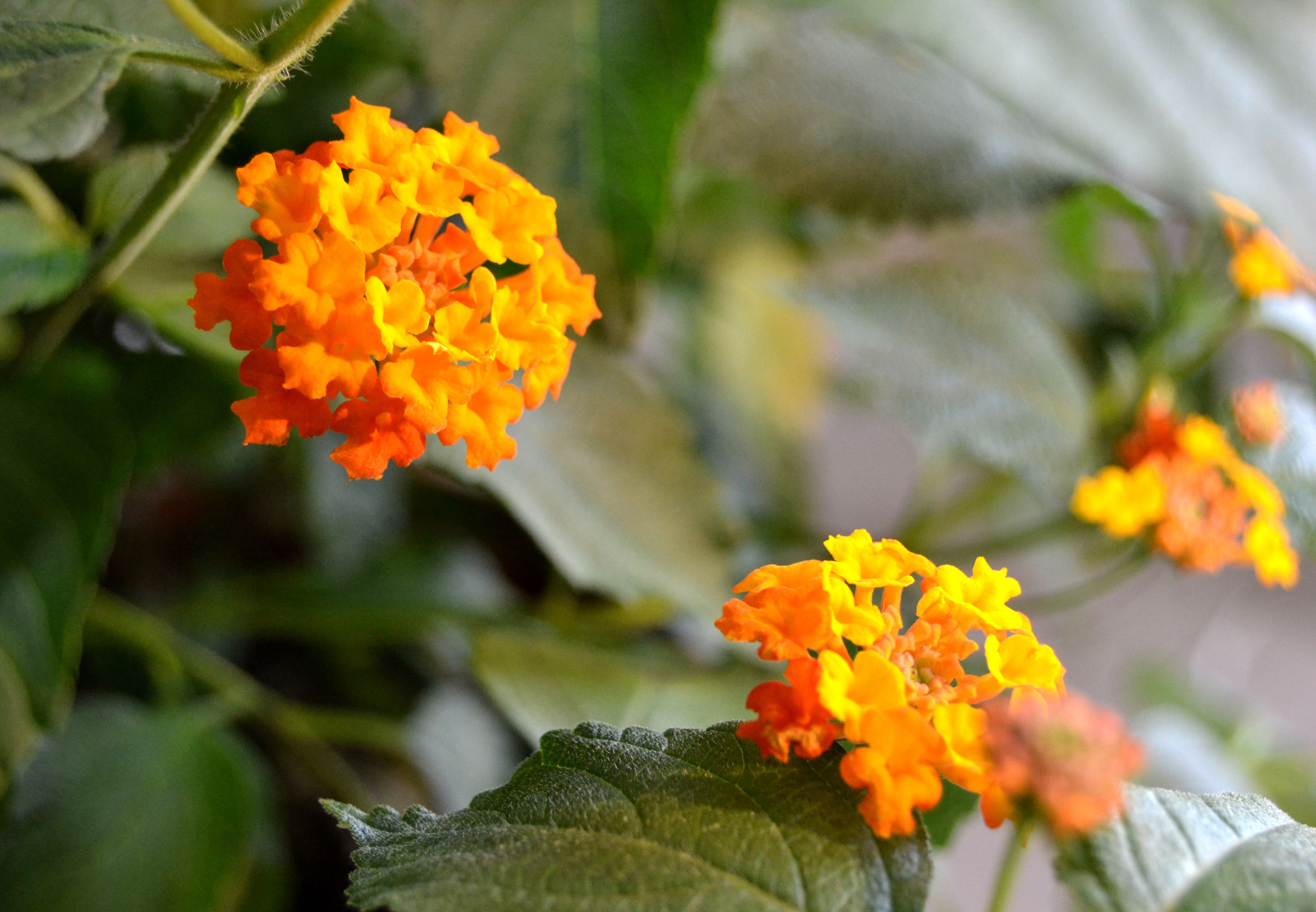 10 Great Plants For Attracting Hummingbirds