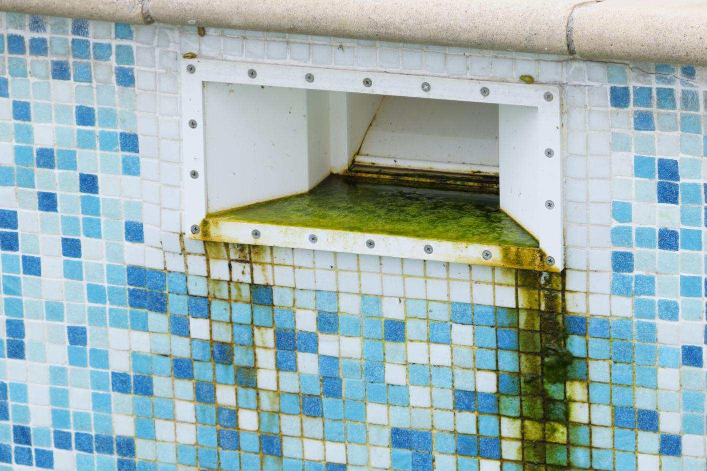 Green Algae Grunge before Cleaning Tiled Swimming Pool