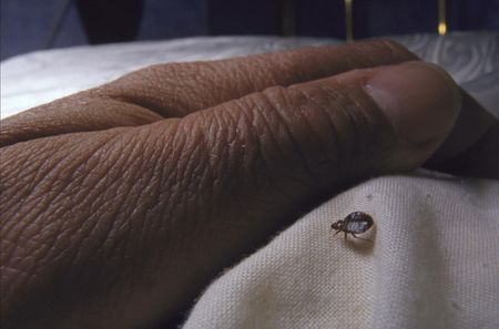 12 Questions About Bed Bugs