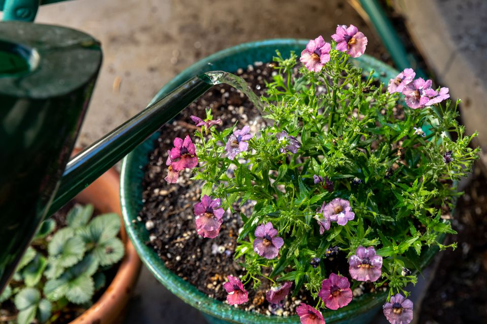Pink and purple flowers planted in a green container