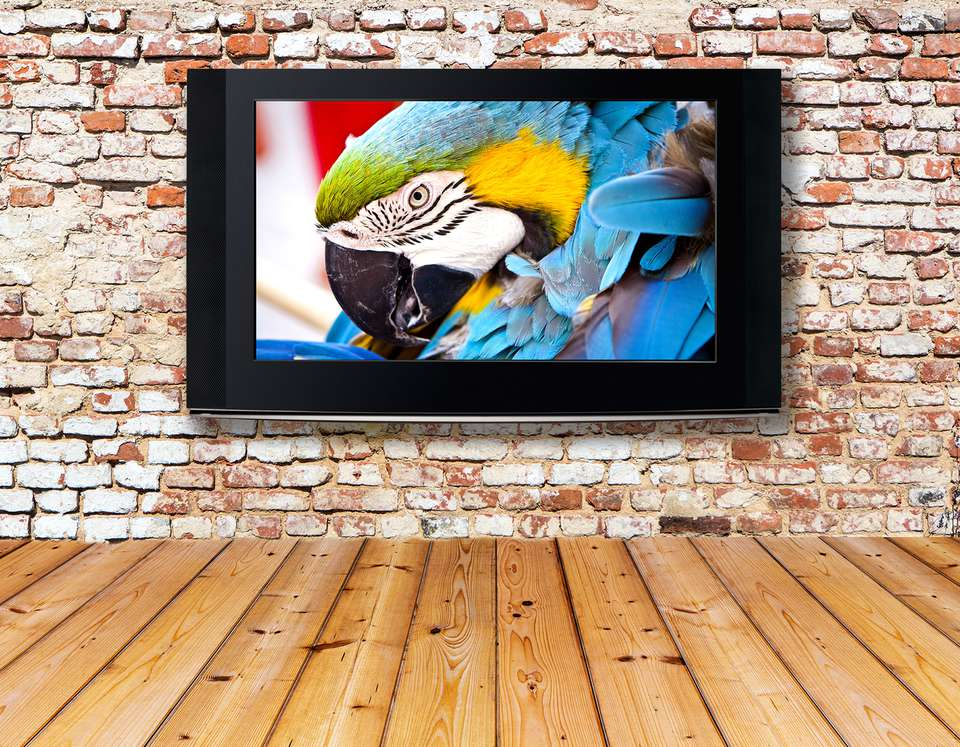 Television Set on an Old Wall Showing Bird Movie