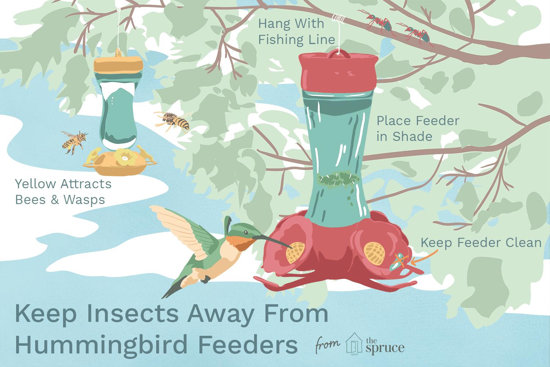Keeping Bees Away From Hummingbird Feeder