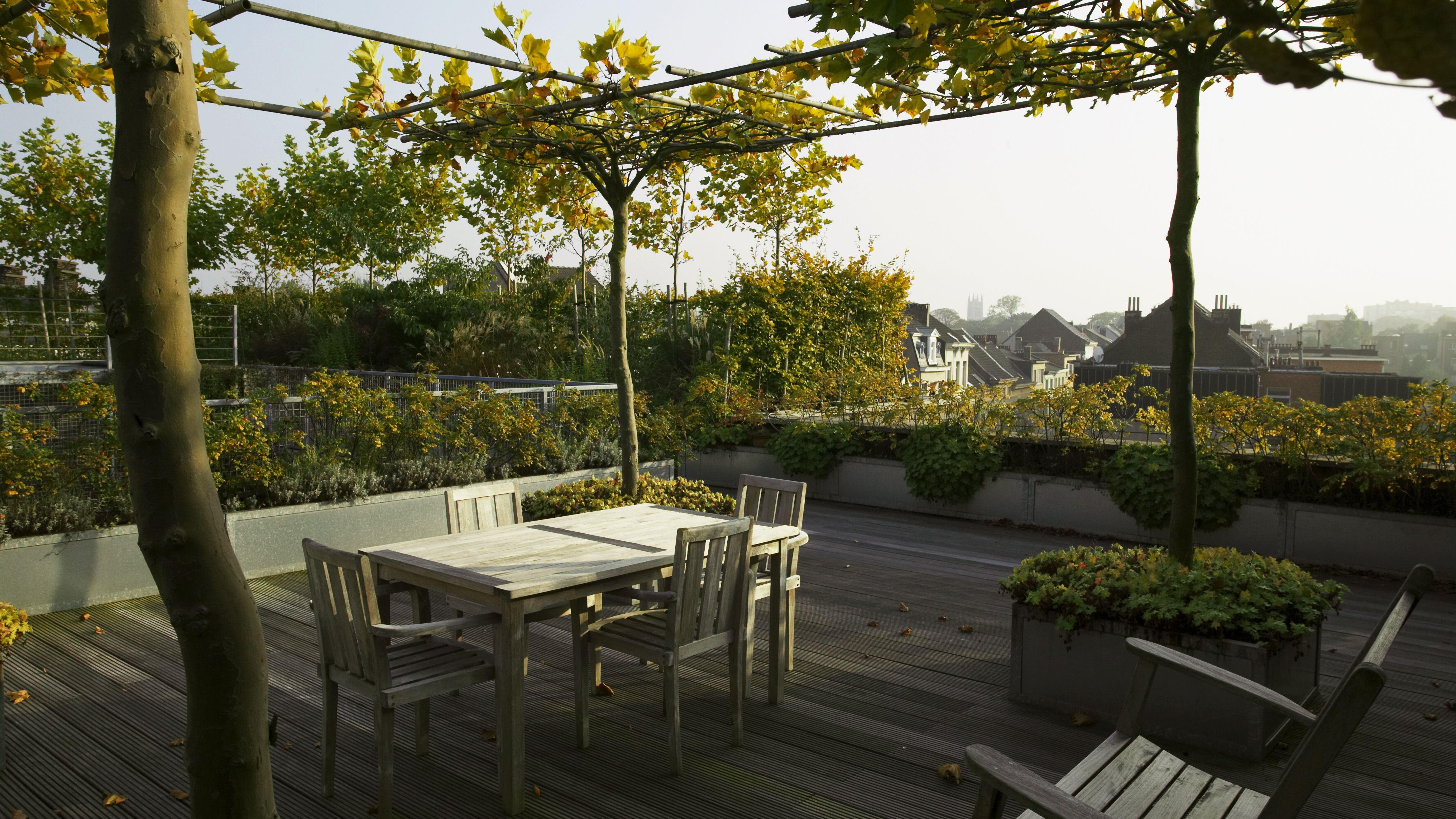 How To Create An Urban Rooftop Garden