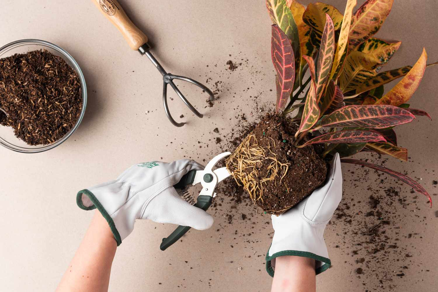 caring for a rootbound plant step 2