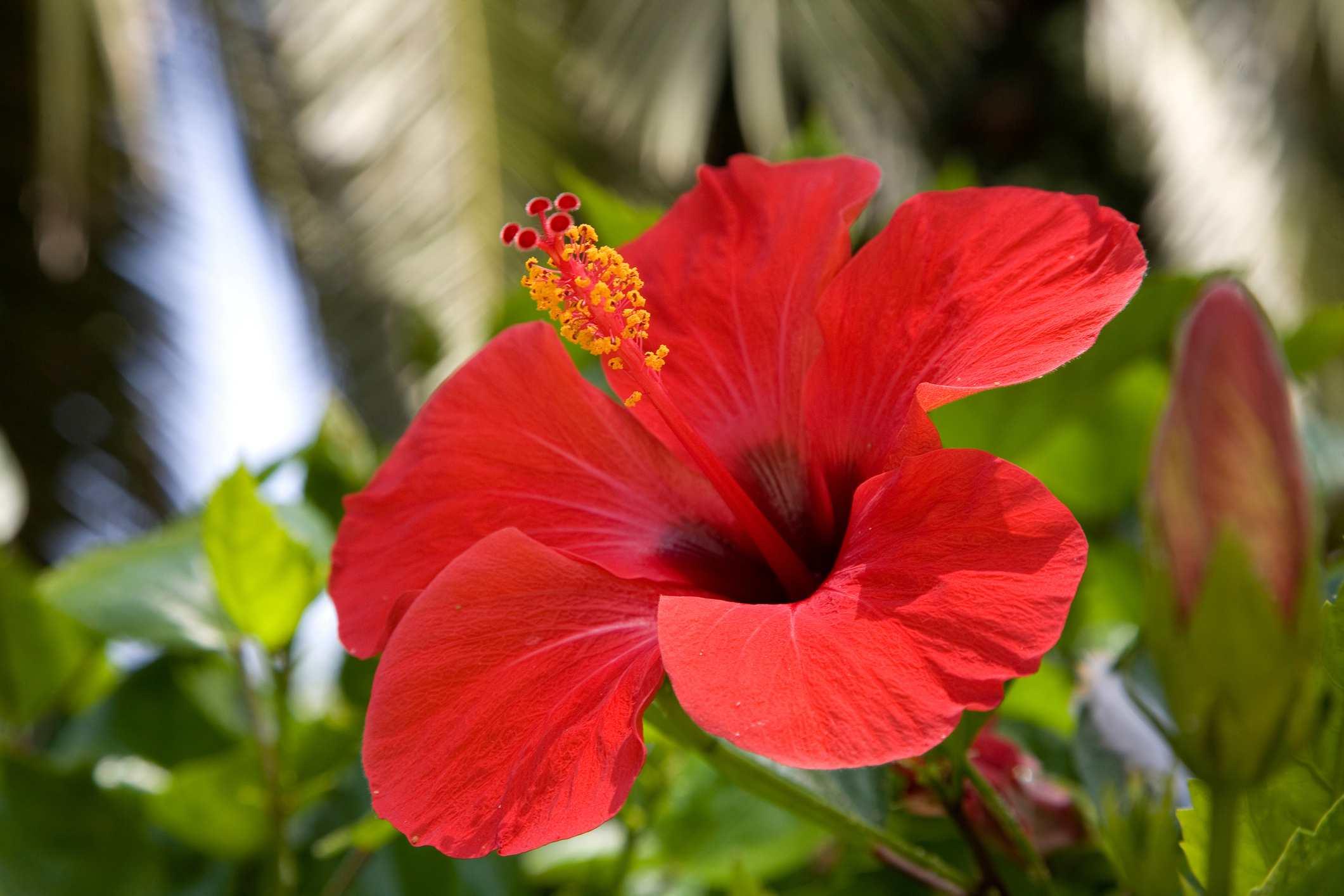 Top houseplants with red flowers izmirmasajfo