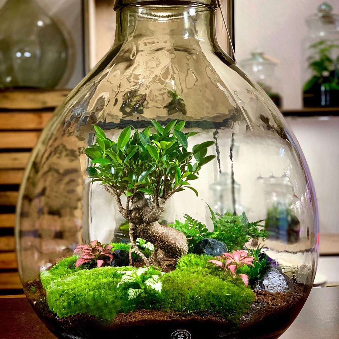 Ideas For Plants In Terrariums