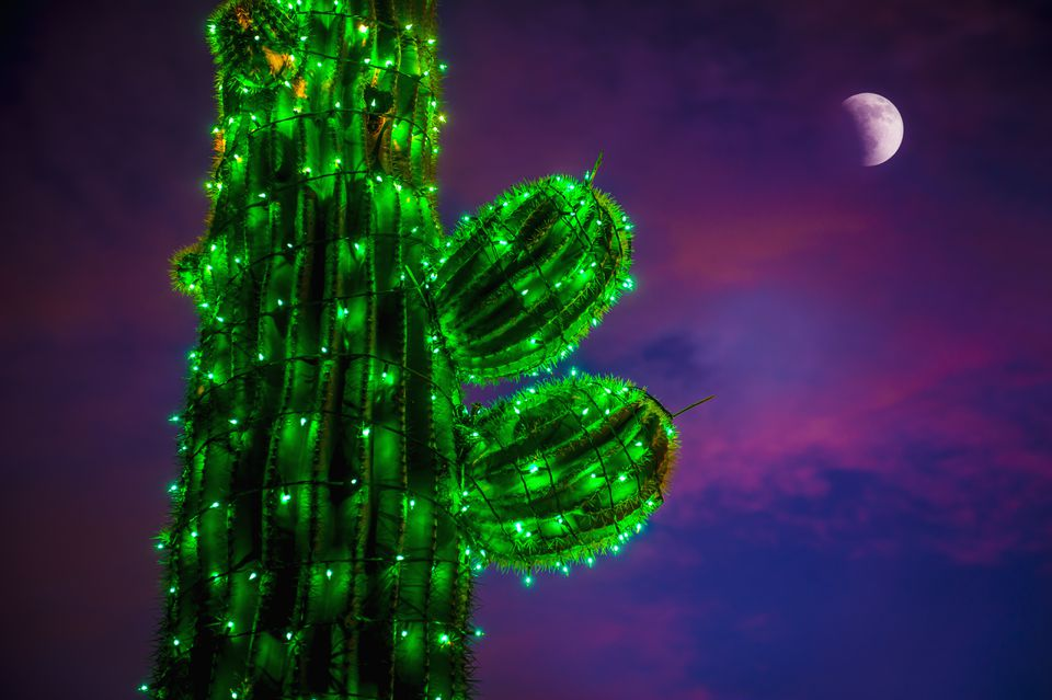Cactus at Christmas