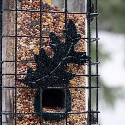 Brome SquirrelSolution 200 Bird Feeder