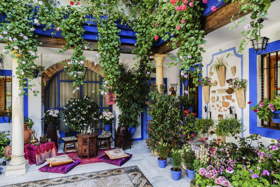Colorful courtyard patio with annuals and other plants growing in pots.