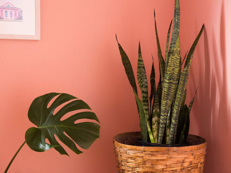 paredes y plantas de interior de color rosa coral