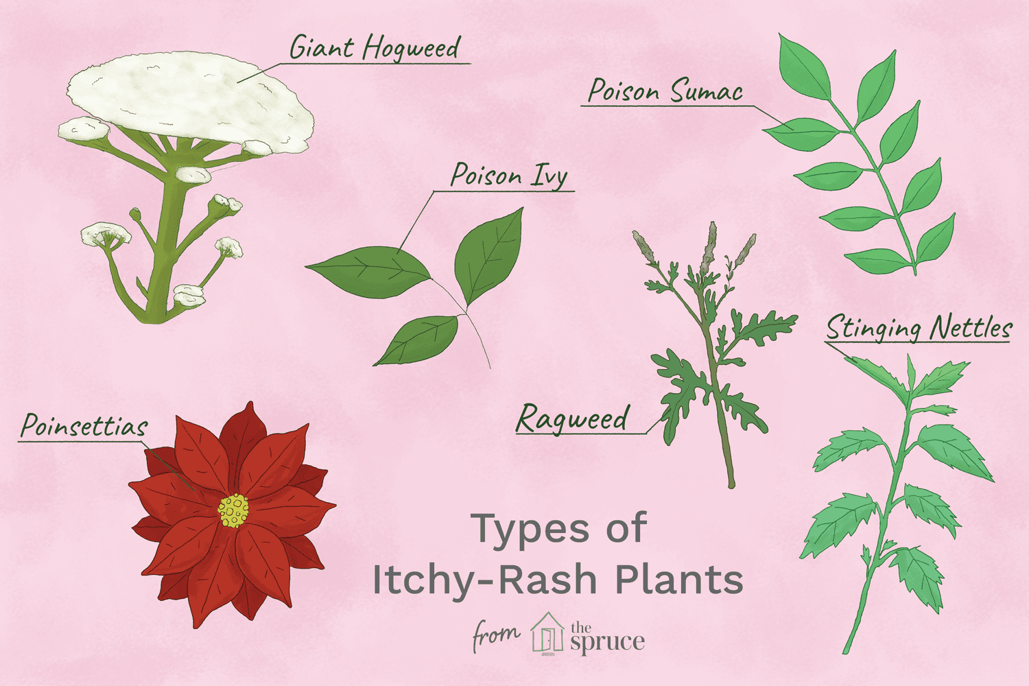 Identify and Avoid Itchy Rash Plants
