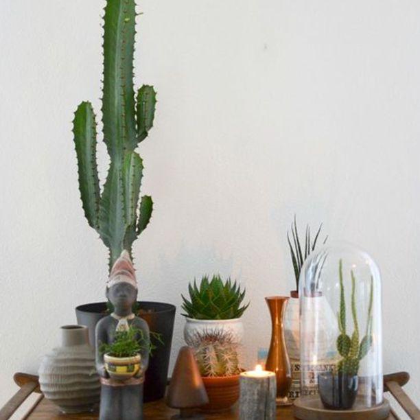 Suculentas y cactus en el carrito de la barra
