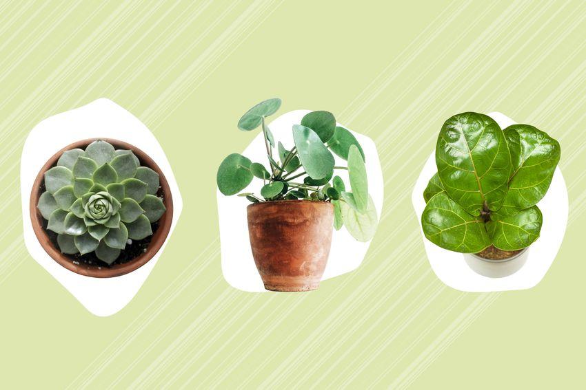 Best Plant Subscription Boxes