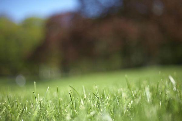 closeup shot of green grass