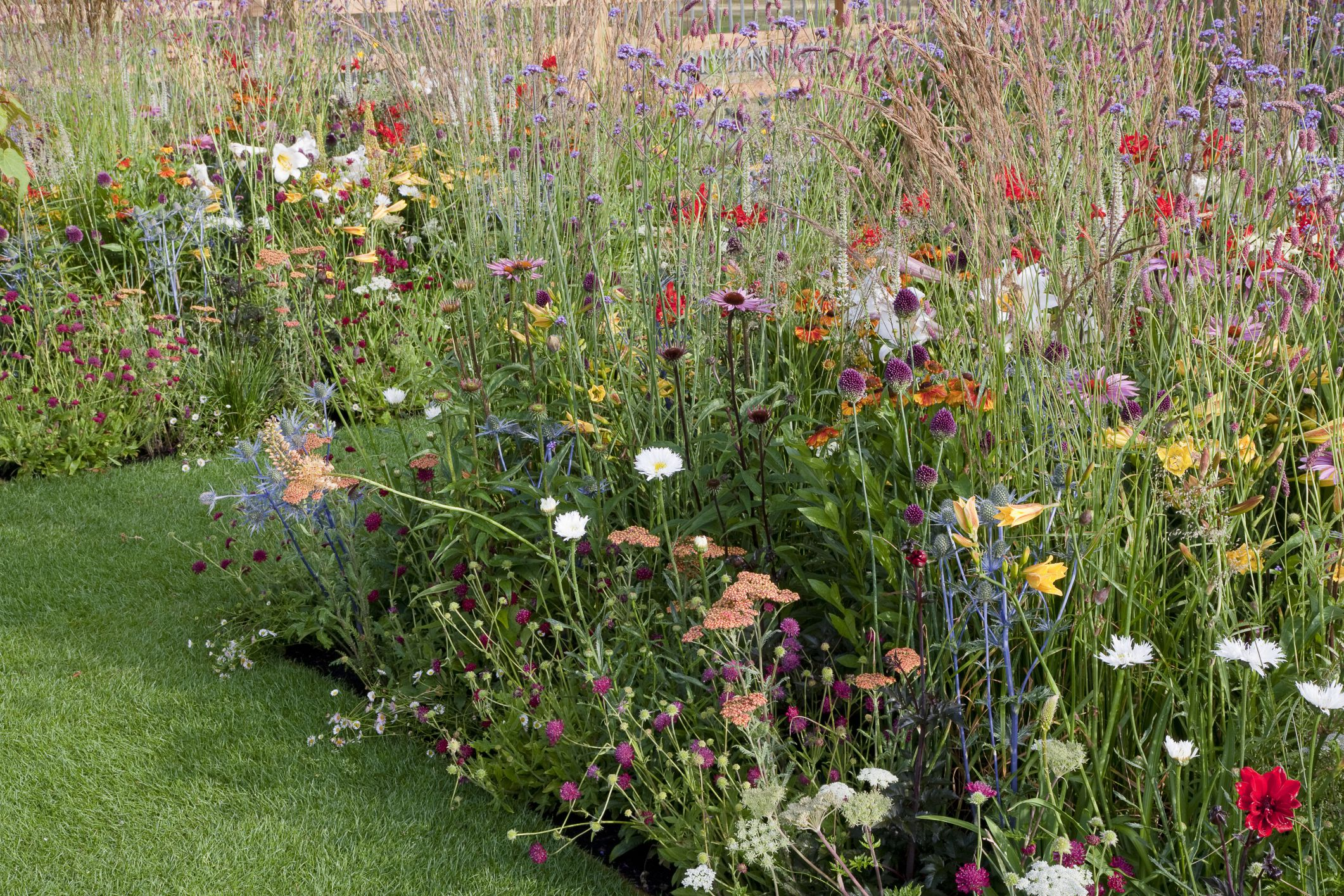 Jardín de flores silvestres