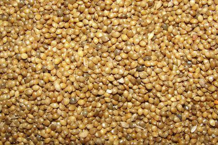 Image result for proso millet