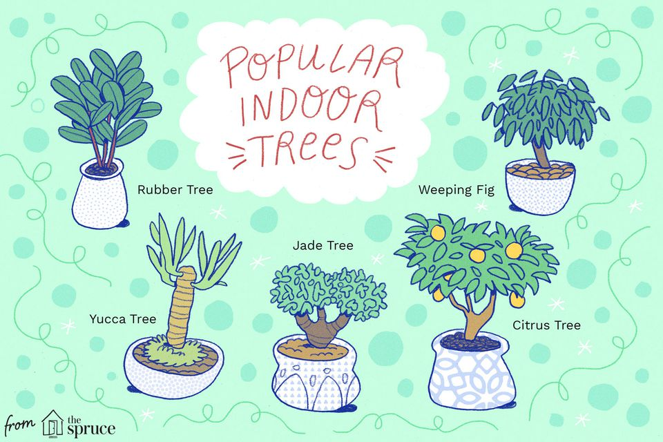 Illustration depicting types of indoor trees