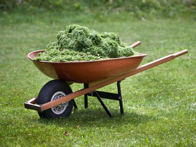 Should I Rake Grass Clippings or Leave Them on My Lawn?