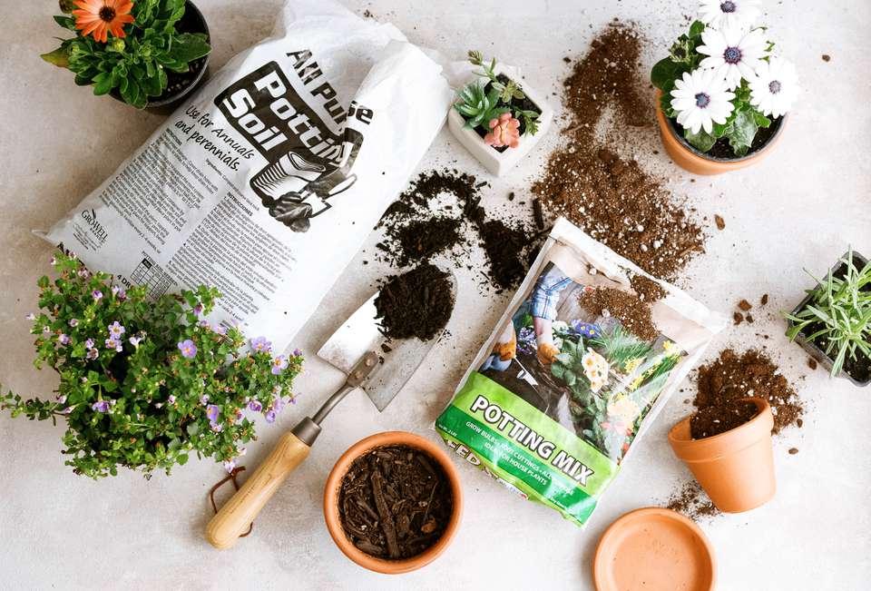 potting soil and potting mix