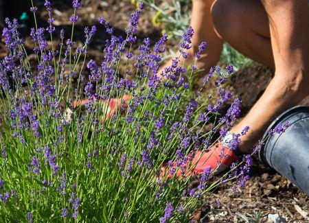 5 Best Herbs To Deter Deer