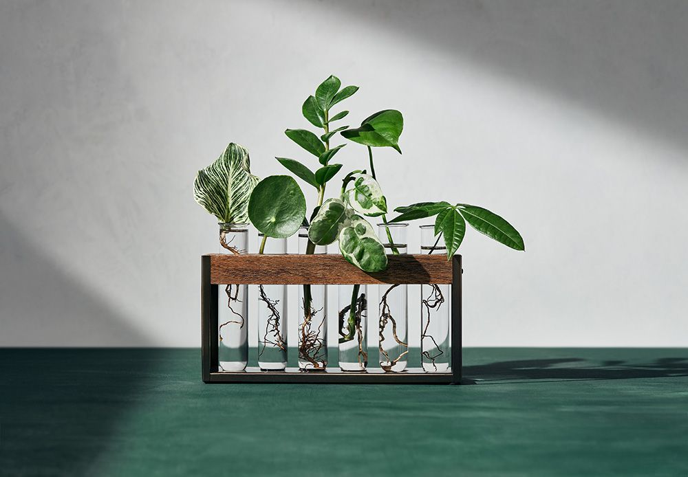 Propagation station with plant cuttings.