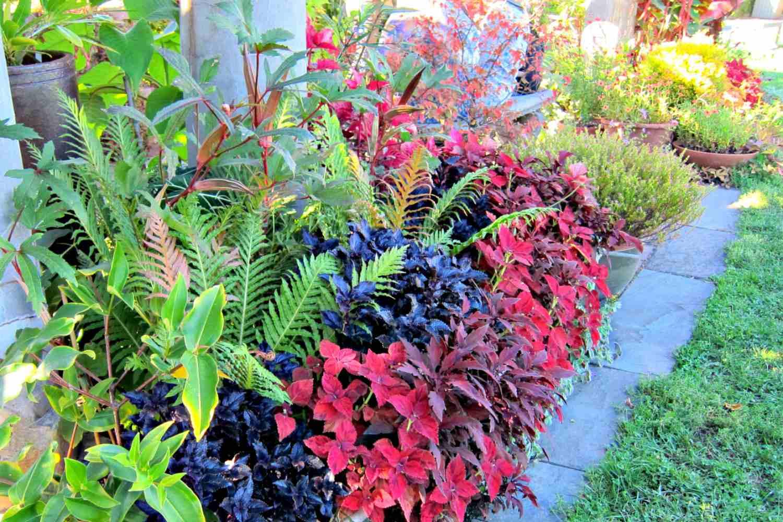 Vibrante jardín fronterizo de otoño