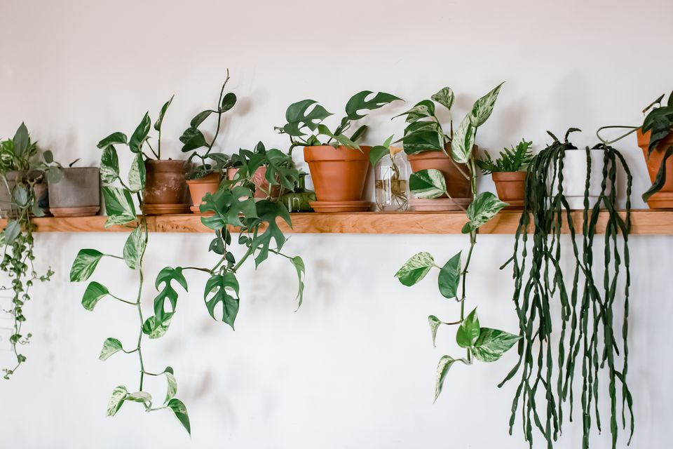 houseplants on a shelf