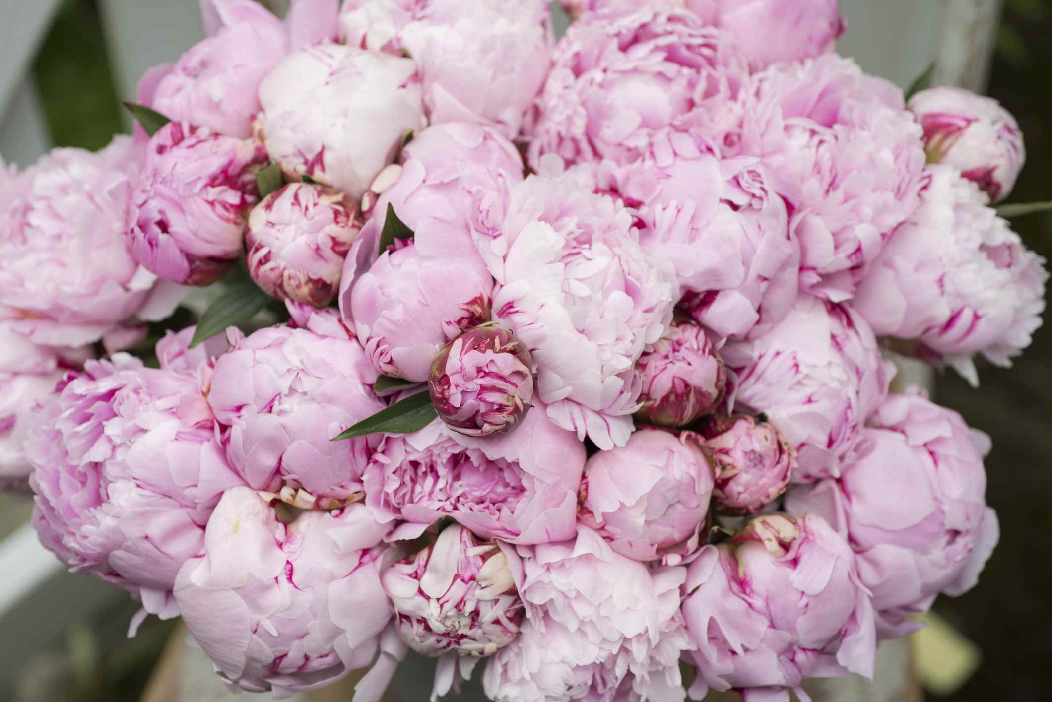 The 12 Best Spring Wedding Flowers in Season