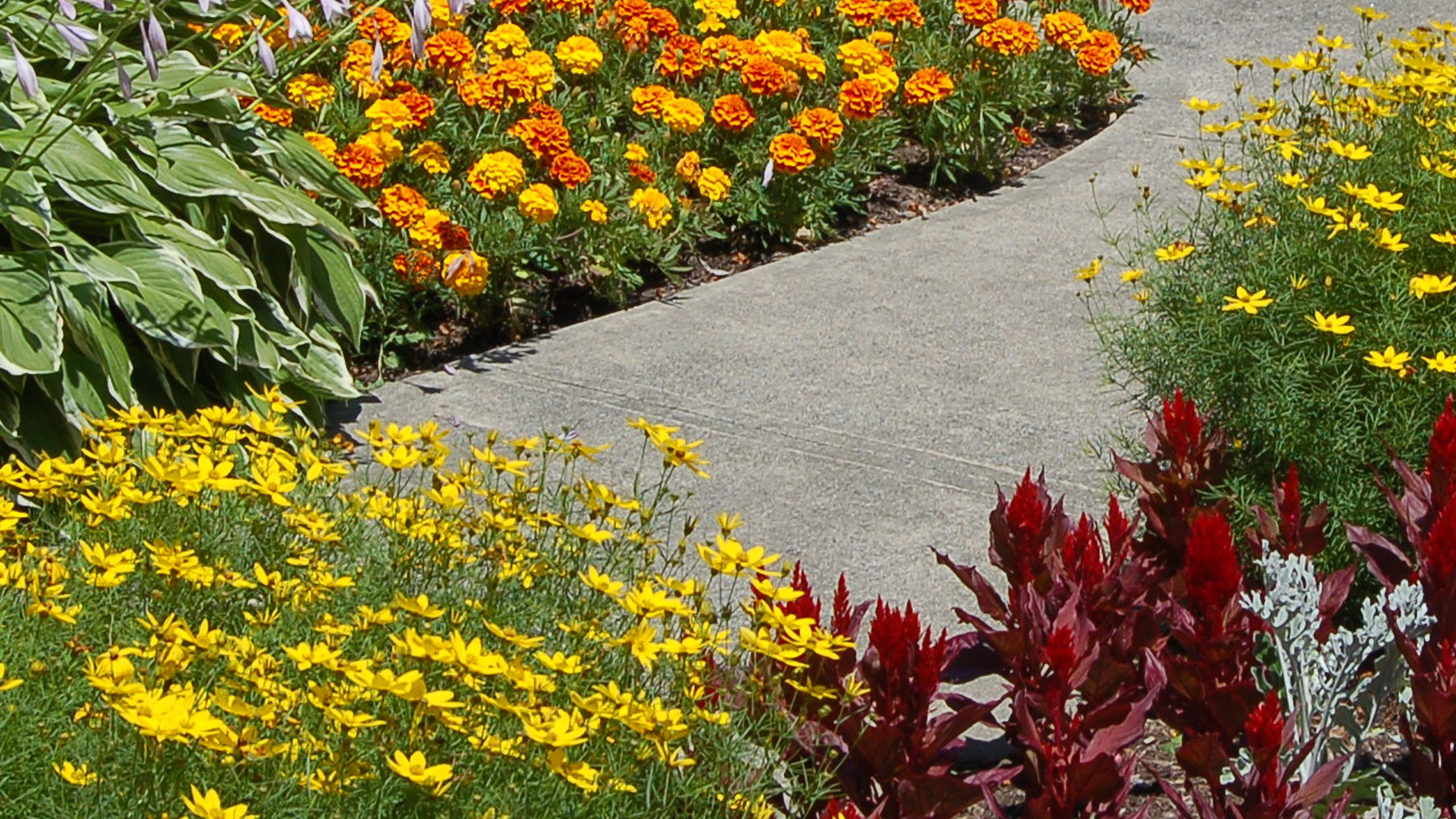How To Choose Edging Plants For Your Landscape