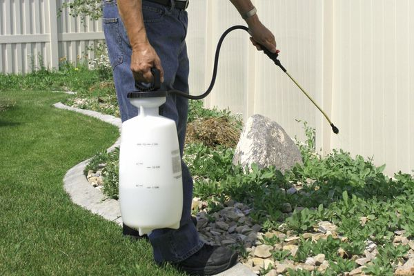 Many spraying a garden area