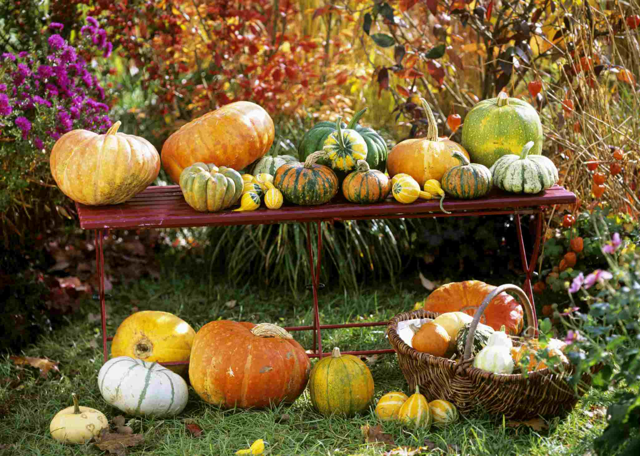 A group of pumpkins and gourds.