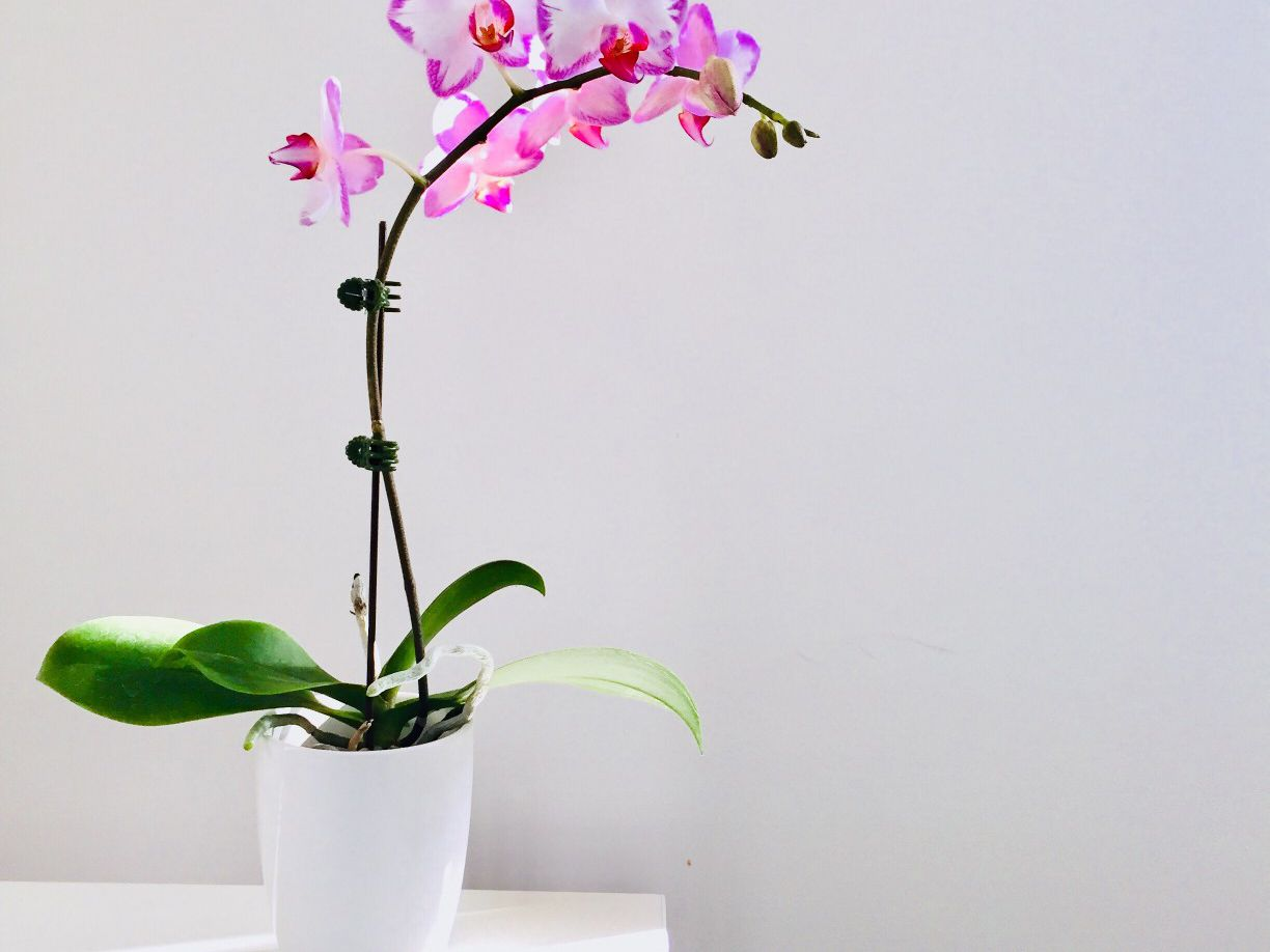 How To Repot Epiphytic And Terrestrial Orchids