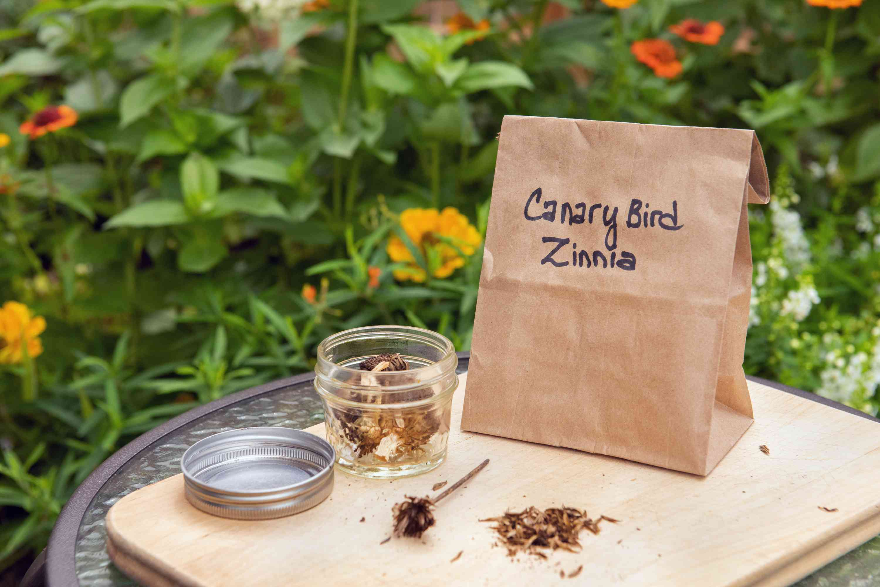 How To Harvest And Save Zinnia Seeds