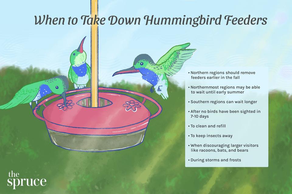 When to Take Down Hummingbird Feeders