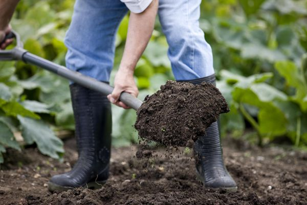 A gardener digging on an allotment