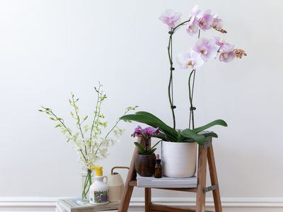 orchids and fertilizers