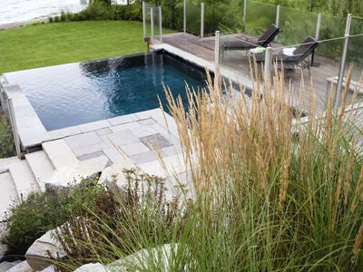 plants in front of swimming pool