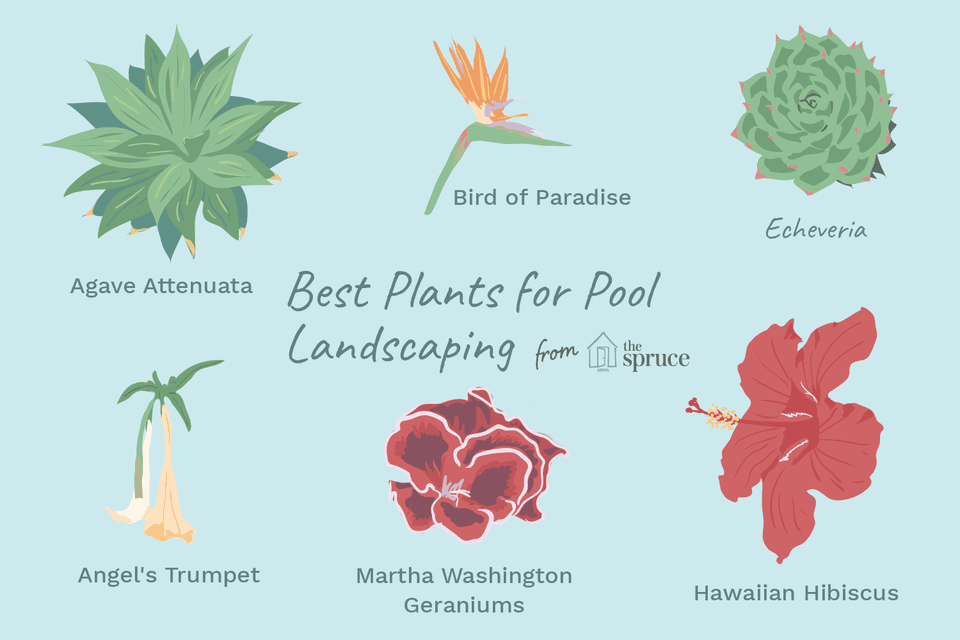 illustration of best plants for pool landscaping