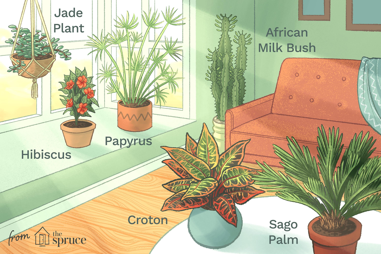 12 Best Houseplants For Sunny Windows