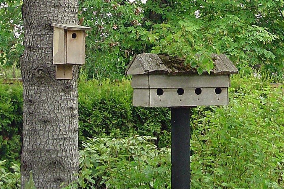 How To Hang A Birdhouse Mounting A Nesting Box