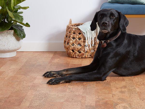 Dog on cork floor