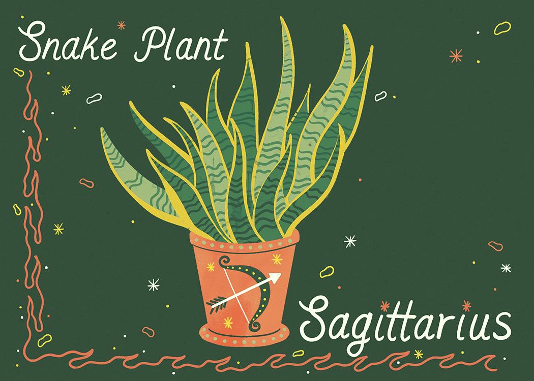 sagittarius snake plant illustration