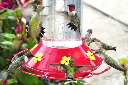 4 Easy Steps To Making Hummingbird Nectar
