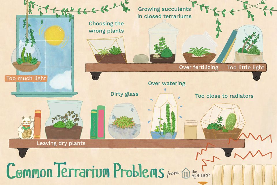 illustration of common terrarium problems and mistakes